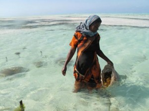 Seaweed farming is an occupation dominated by women who live in rural villages and it is one of the few jobs accessible to women that pays them in cash.